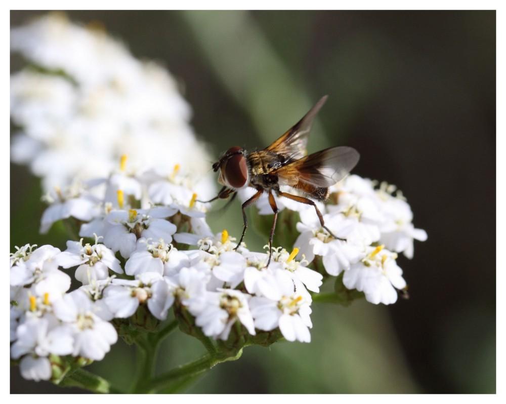Die letzten Insekten des Sommers 1