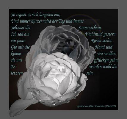 Die letzten Rosen