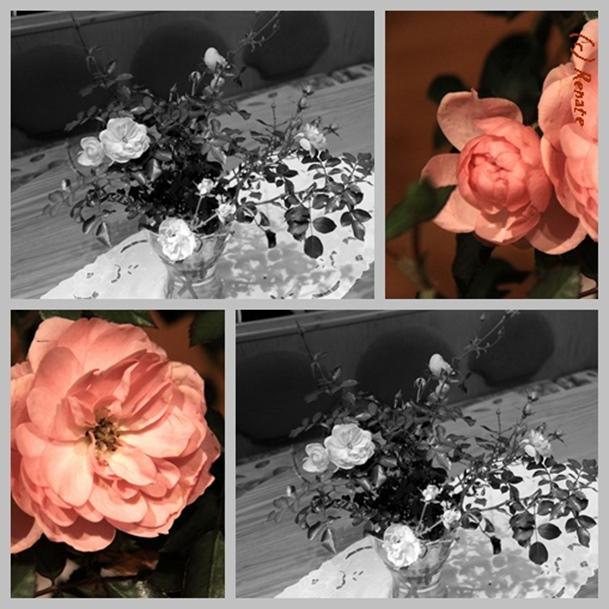 Die letzten Rosenblüten