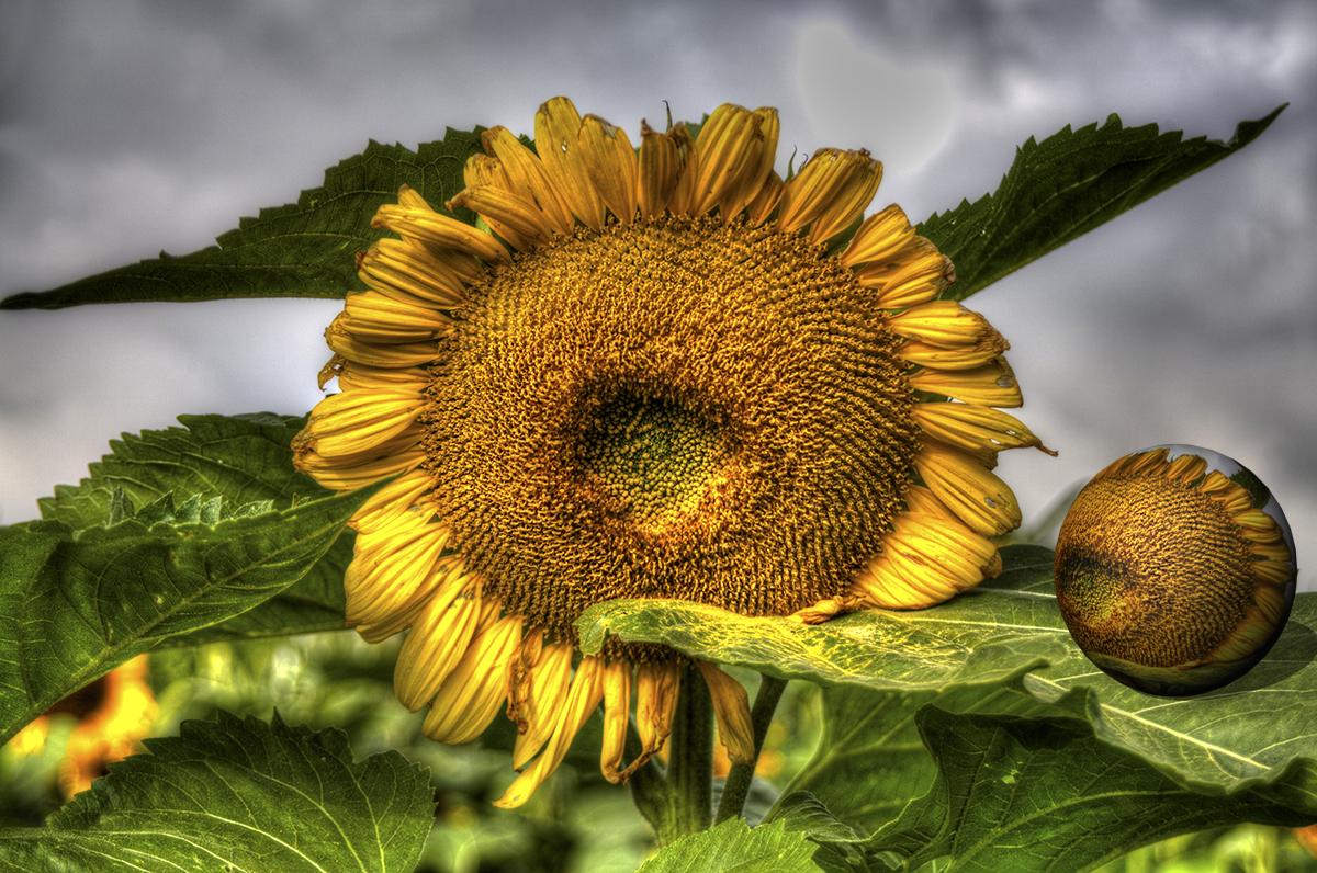 Die Letzten Sonnen des Jahres