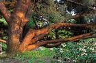 Die letzten Sonnenstrahlen unter dem alten Baum