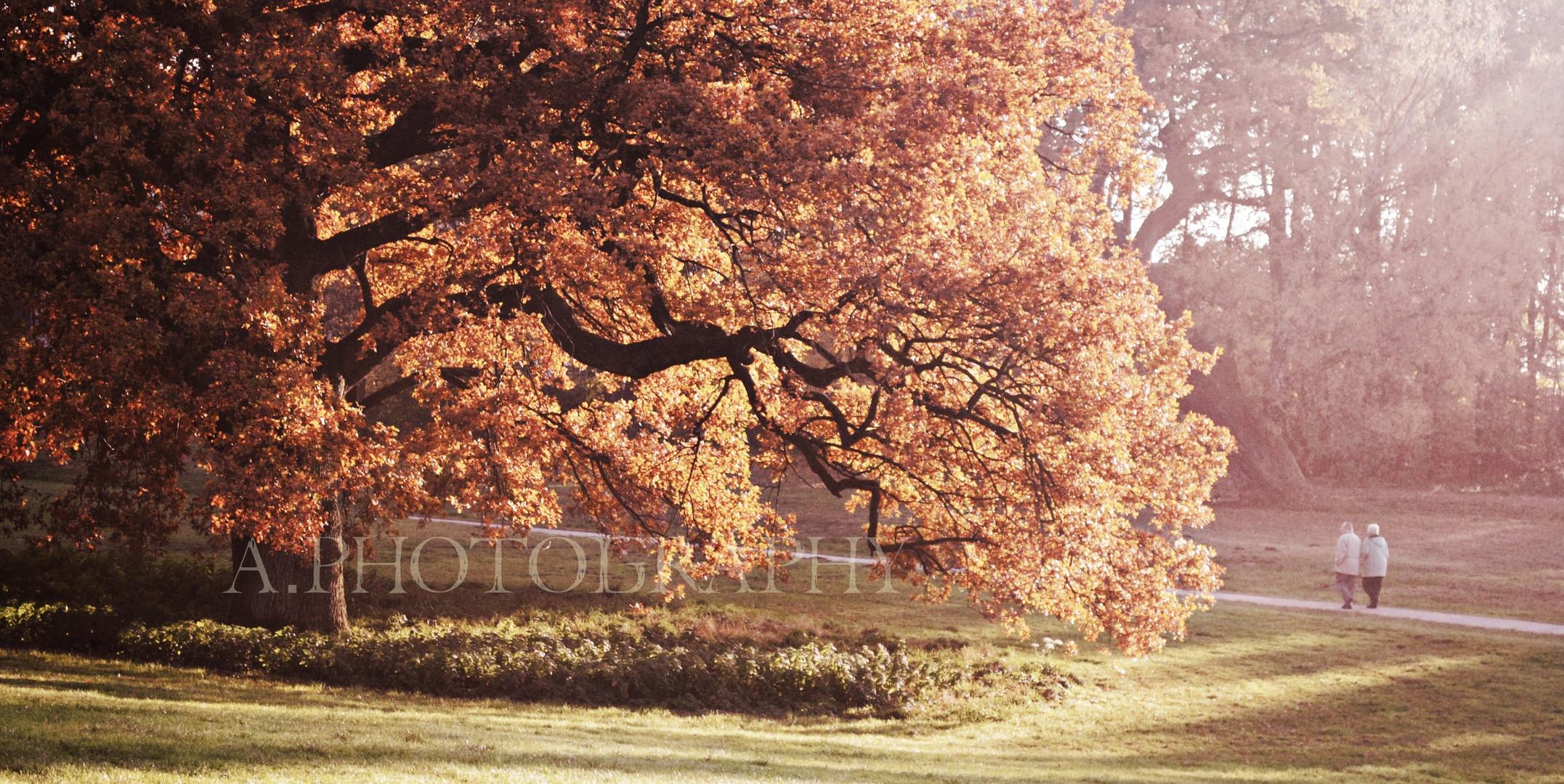 Die letzten Tage des Herbstes.