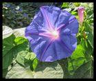 Die leuchtende Blüte