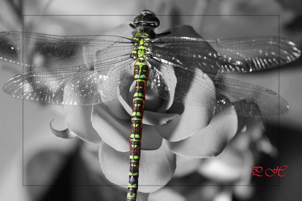 ....die Libelle...;-)