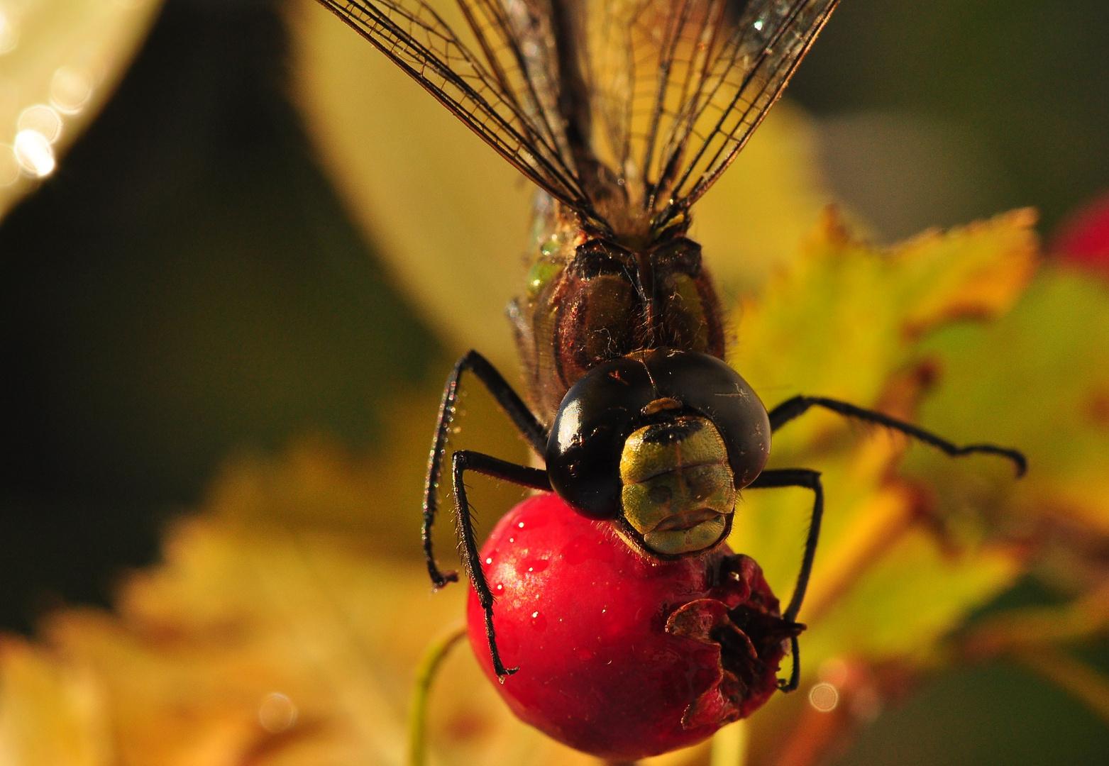 Die Libellen aus dem Jahr 2013 .....