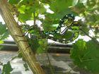 Die Libellenliebe