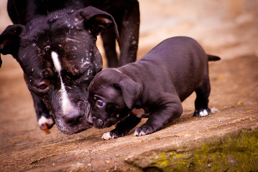 Die Liebe einer Adoptivmutter