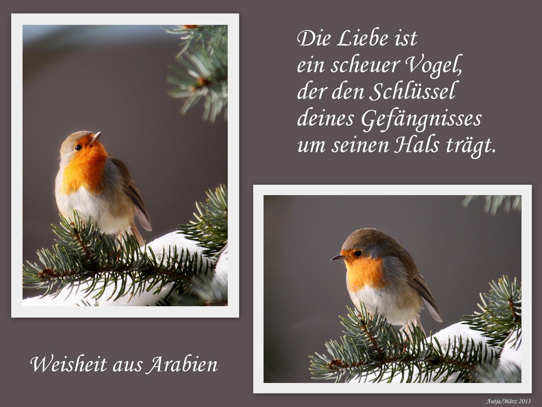 Die Liebe ist ein scheuer Vogel ...