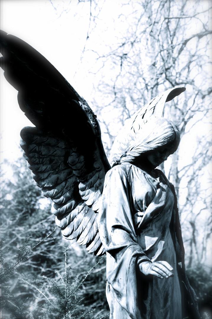 """""""Die Liebe schlägt ewig Ihre Flügel """""""