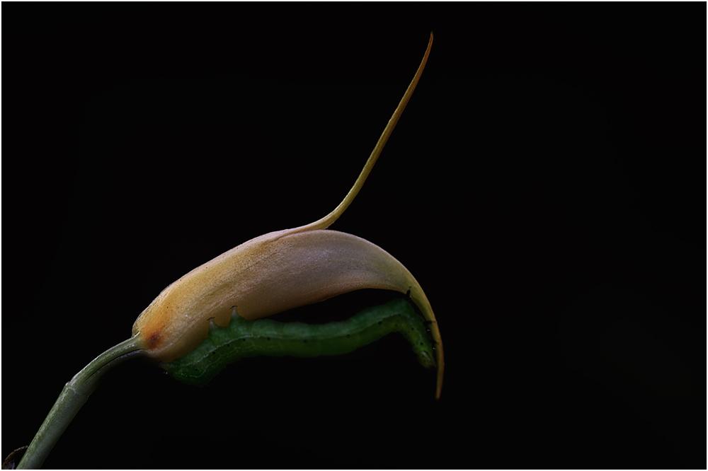 Die Liebe zu Orchideen .......(2)