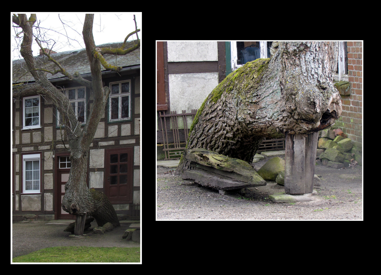 Die Liebe zum Baum in der Amtsmühle Dambeck bei Salzwedel