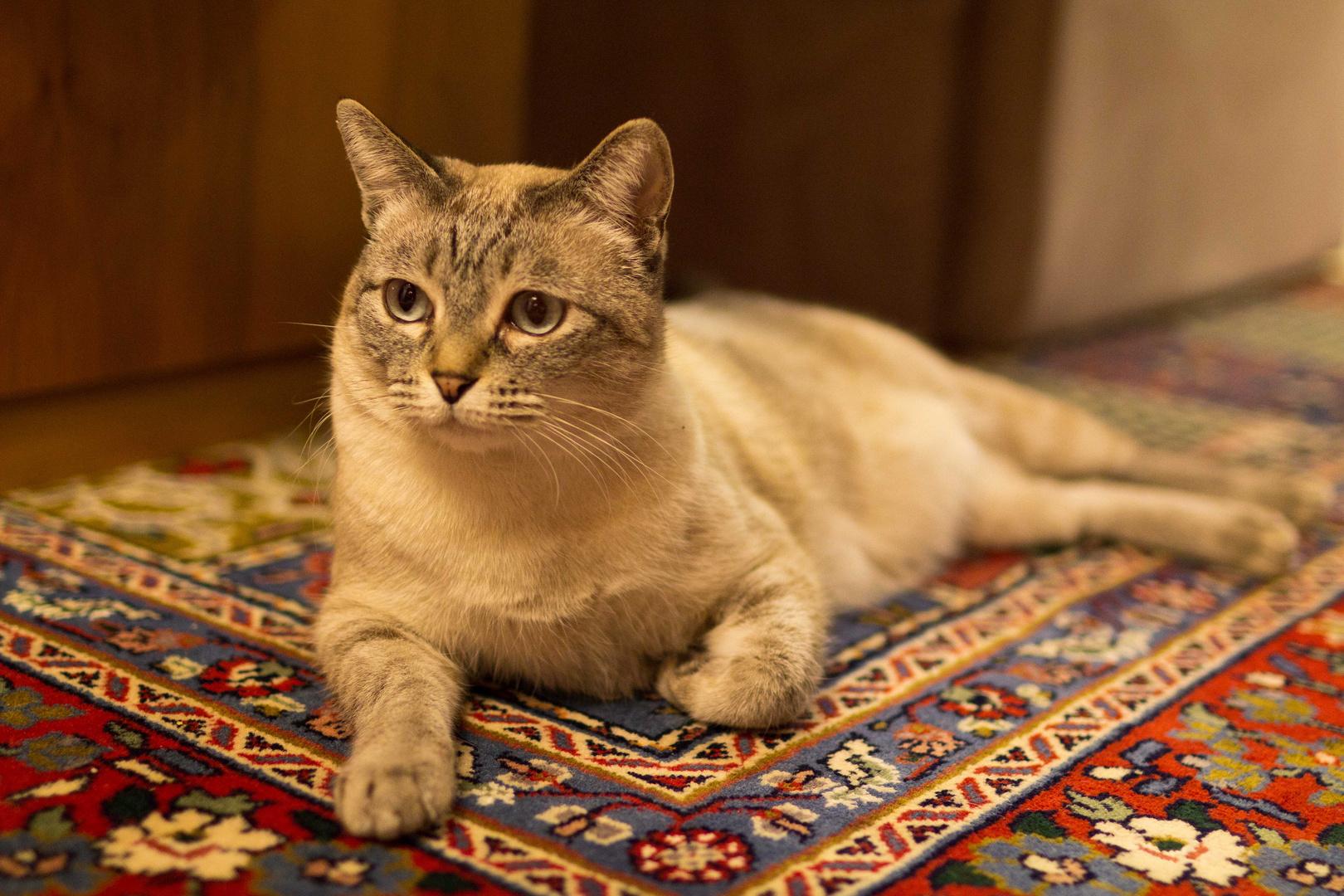die liebste Katze
