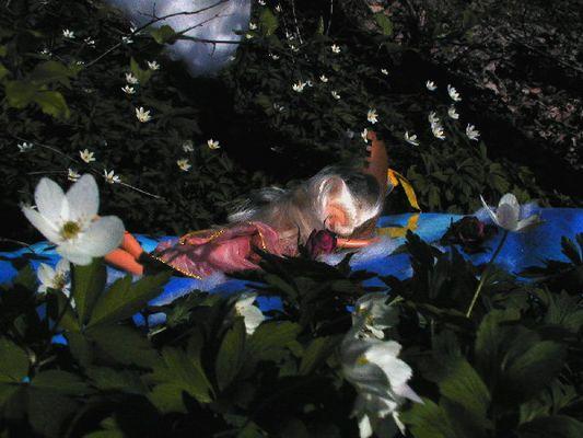 Die Lilienmaid von Astolat