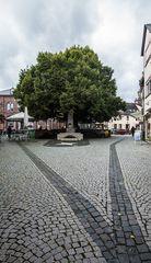 Die Linde von Geisenheim ..