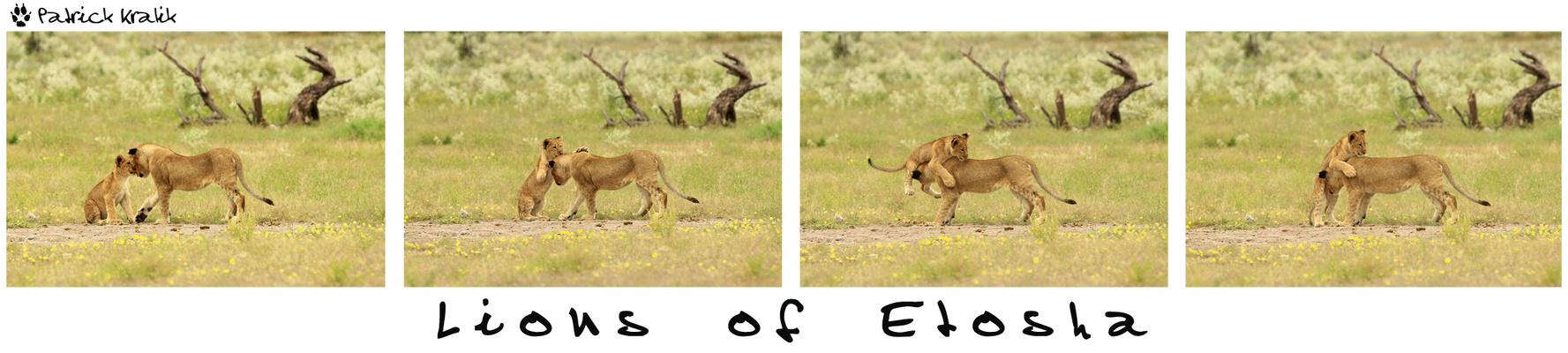 Die Löwenkinder von Etosha