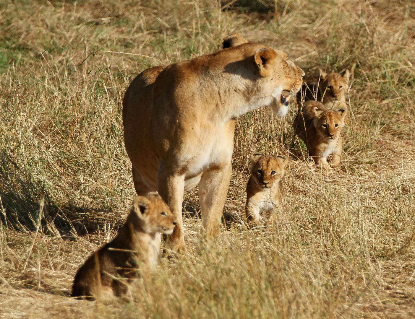 ......Die Löwenmama mit den 4 Jungen...1....