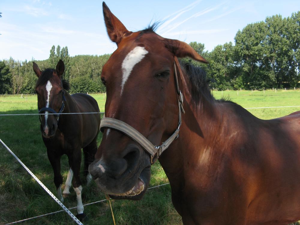 Die lustigen Pferde von Kemme III