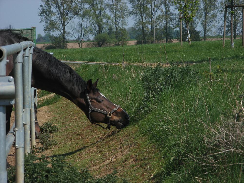 Die lustigen Pferde von Kemme VIII