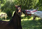 Die lustigen Pferde von Kemme XXXIV