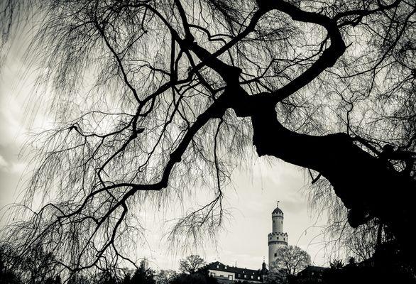 Die Mächtigkeit der Bäume