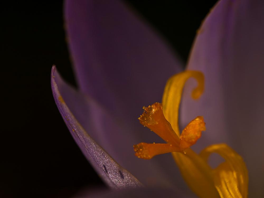 Die Magie in der Blüte RELOAD