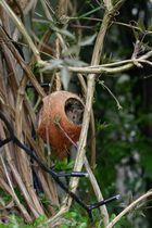 Die Maus der Kokosnuss 3