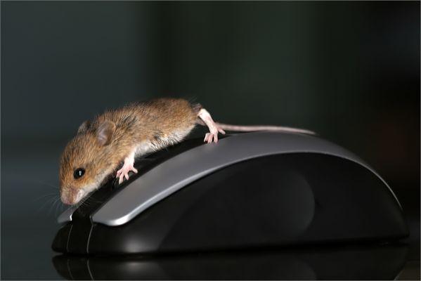 Die Maus ist zwar für Linkshänder geeignet, aber doch einen kleinen Tick zu gross !
