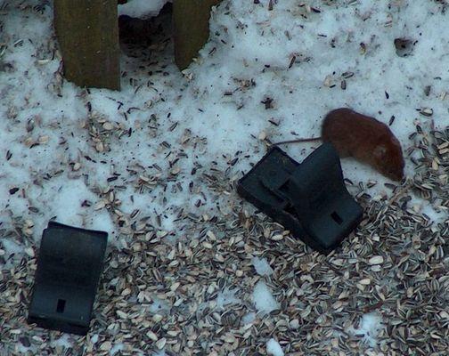Die Maus will nicht
