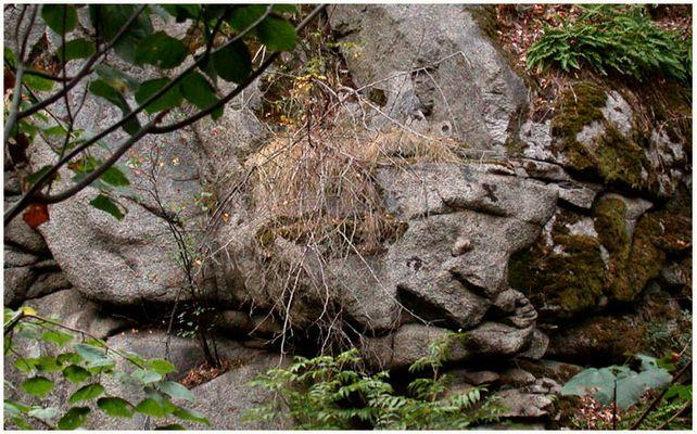 Die Mayas waren doch im Bodetal