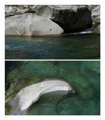 Die Meerestiere der Verzasca