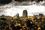 die Megalithen von Carnac