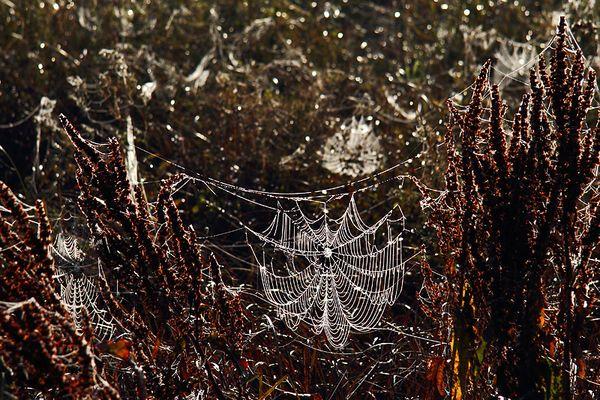 die Meister der Spinn-Kunst...