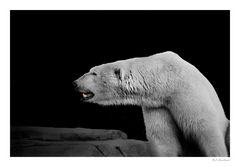 Die Melancholie des Eisbären