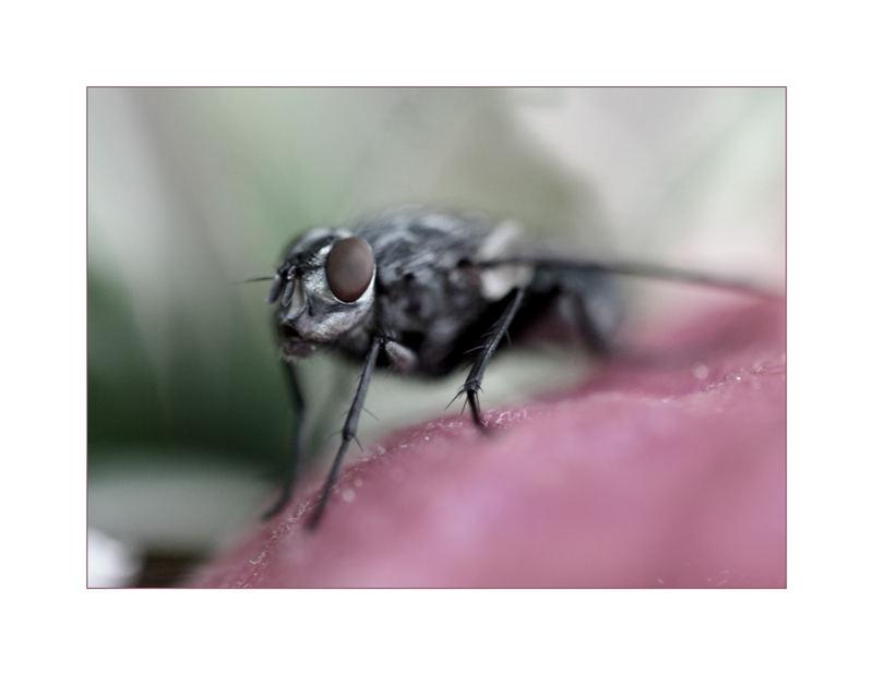 die melancholische Fliege :-)