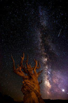 Die Milchstraße über den Bristlecone Pines