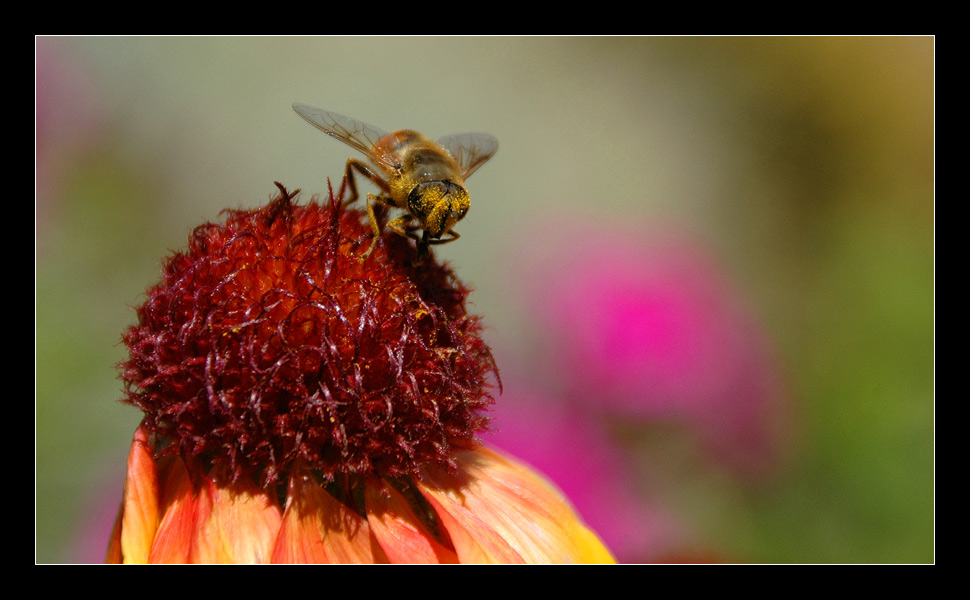 Die mit dem Pollenblick