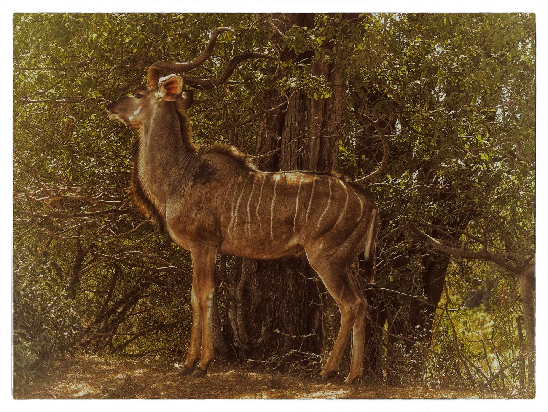 Die Mittagshitze und das Kudu