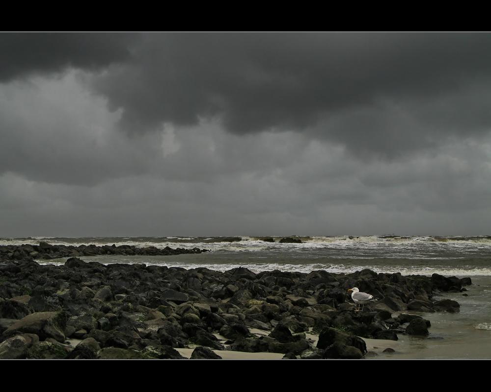 Die Möwe und der kommende Sturm