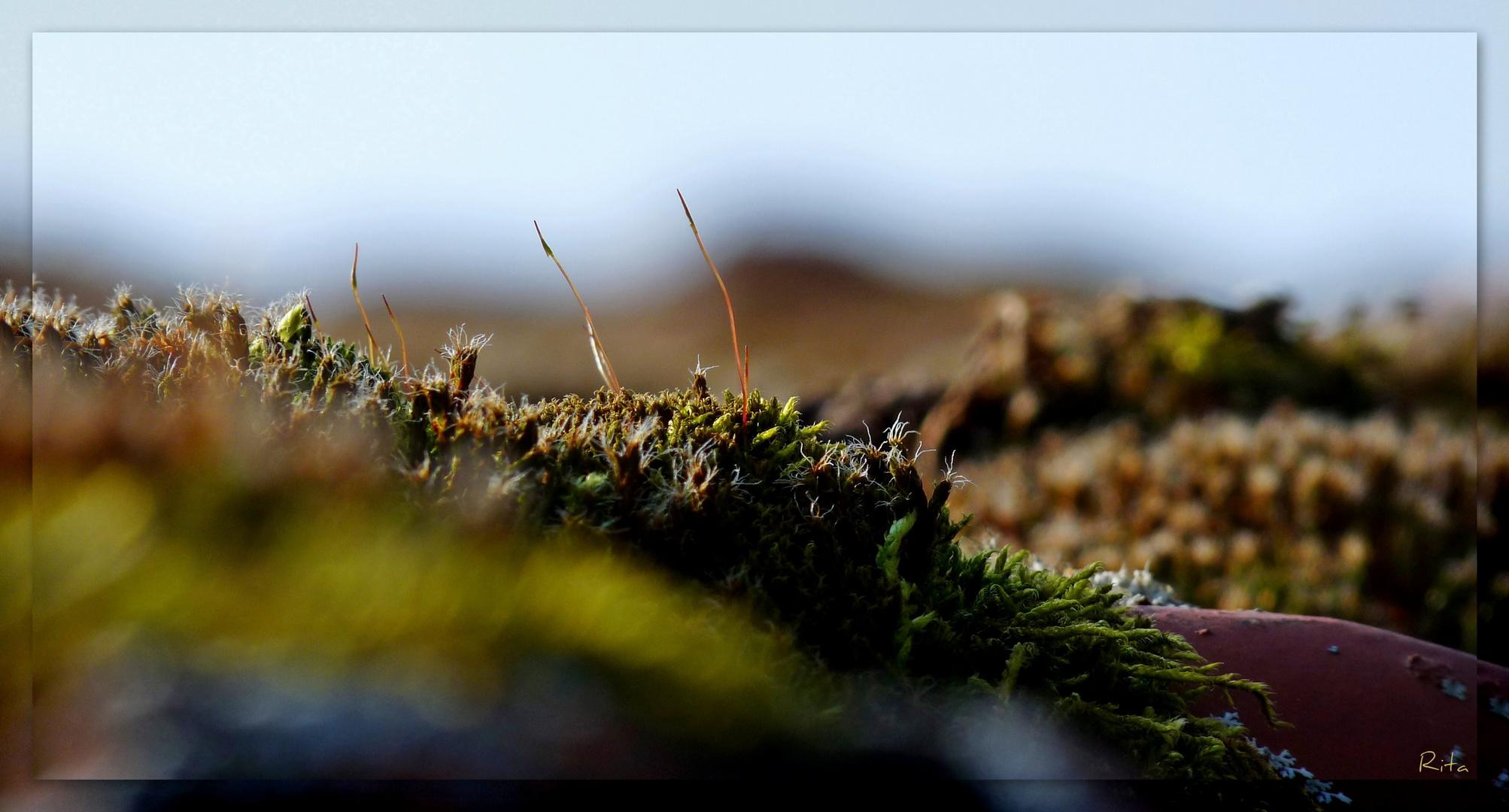 die Mooslandschaft (2)...