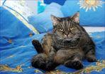 Die Mucki beim Katzenyoga,möchte nicht gestört werden...wie der Blick es zeigt.