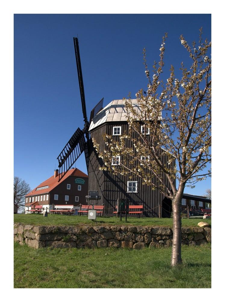 Die Mühle im Frühling