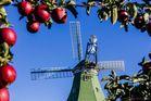 Die Mühle Venti Amica während der Apfelzeit