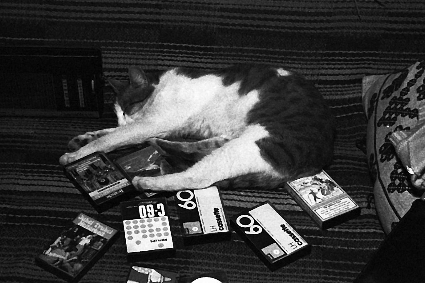 Die musikalische Katze