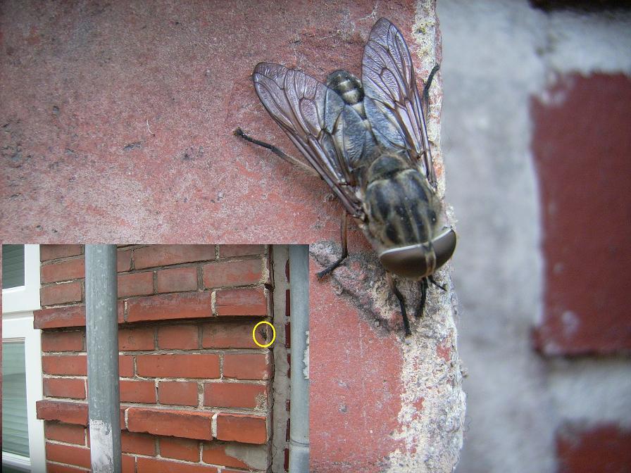 Die Mutierte Fliege ;)