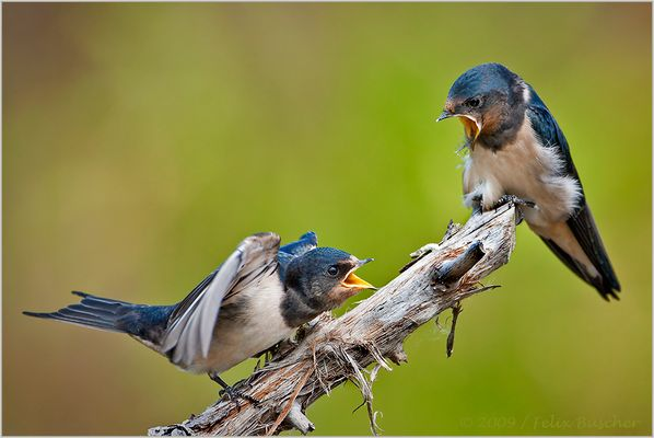 """""""Die nächste Fliege gehört jetzt aber mir! Klar?"""""""