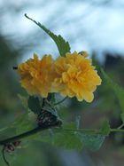 Die namenlose Blüte