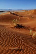 Die Namib ruft 1