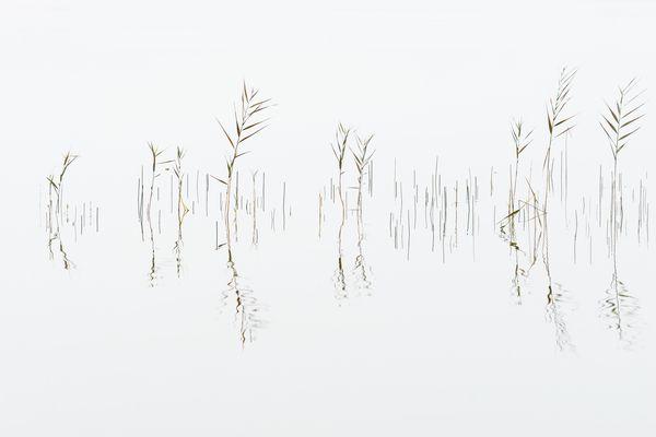 Die Natur als Künstler