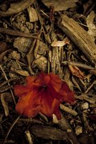 Die Natur am Boden