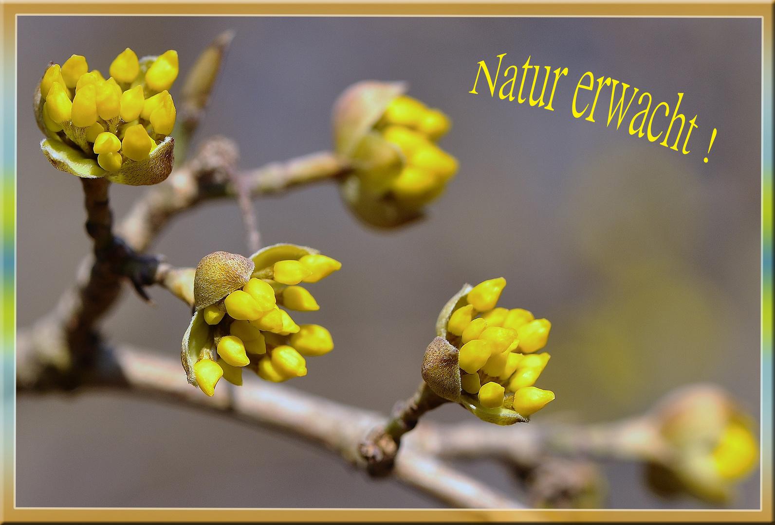 Die Natur erwacht